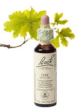 Oak / eik