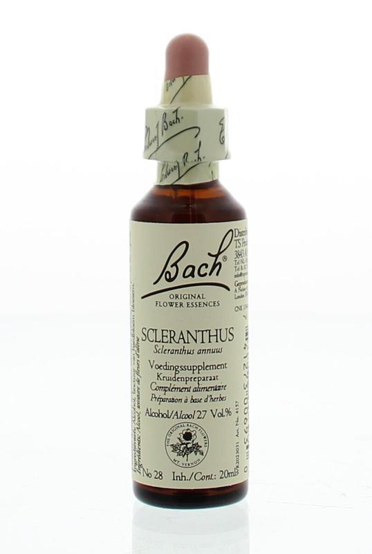 Scleranthus / hardbloem