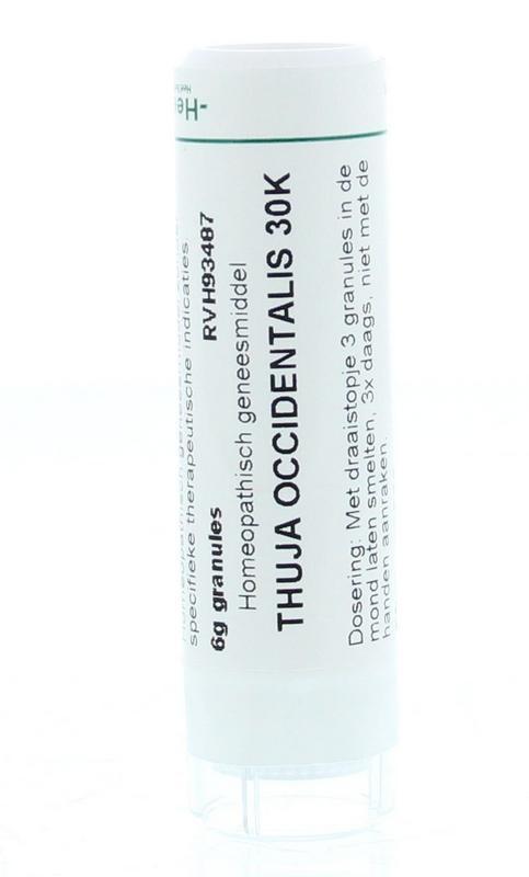 Thuja occidentalis 30K