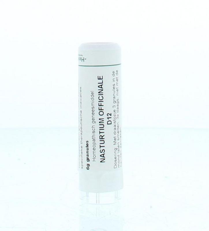 Nasturtium officinalis D12
