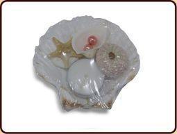 Zeepschelp Pecten maxima
